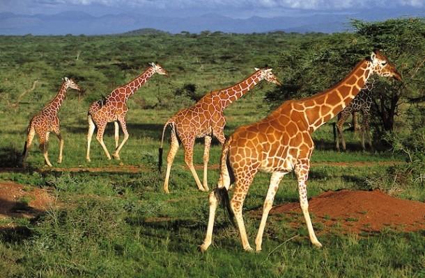 Speciale Africa: un continente ricco e dai mille volti…