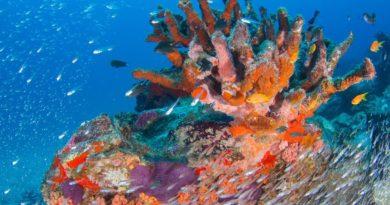 Alle Seychelles per vacanze a tutta natura…
